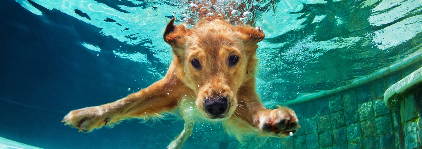 Dog Inside Swimming Pool
