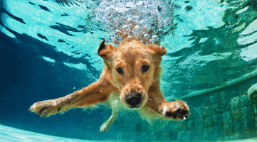Dog Inside Pool